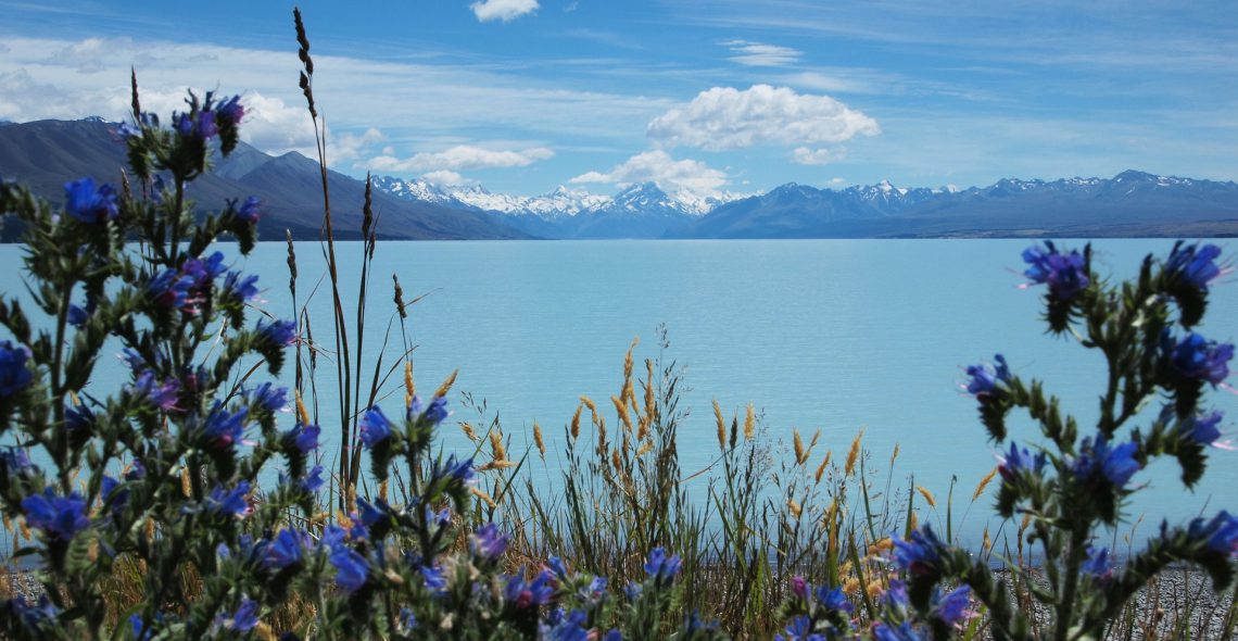 A Fortnight in the South Island